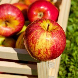 יתרונות התפוח